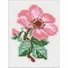 Rose sauvage  641  Riolis