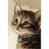 Chaton  Kitten  0158081  VERVACO