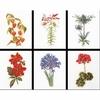 Six  études  floral  II  3082  Thea Gouverneur