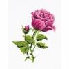 Rose  HB111  Riolis