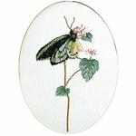 Thea Gouverneur 1022 - Papillon vert - kit point de croix compté - La-Brodeuse