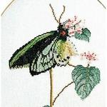 Thea Gouverneur 1022 - Papillon vert - kit point de croix compté - La-Brodeuse - 1