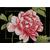 Kit broderie Lanarte Pink Rose PN-0155749 sur www.la-brodeuse.com