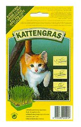 Graine d 39 herbe chat comportement du chat meganimo - Herbe a chat graine ...