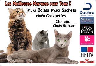 Alimentation-Chat