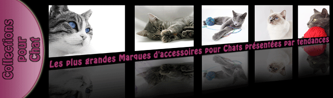 accessoire-luxe-chat