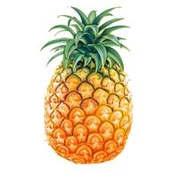 Pate Ananas seau 5 kg