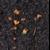 balade-en-terre-neuve