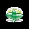 pictos-saveurs_Homeomint