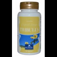 Tribulus terrestris L. - 450 mg - 90 comprimés