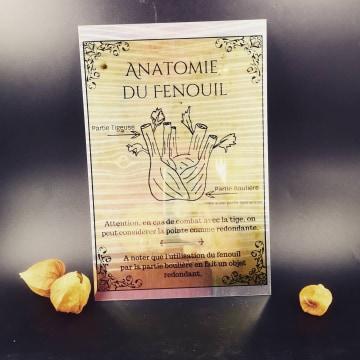 Plaque-métal : Anatomie du Fenouil