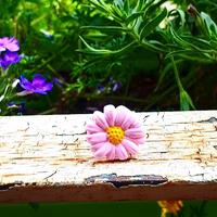 Bague : Fleur (Violet)