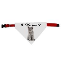 Collier pour chat bandana chartreux personnalisé avec le nom de votre animal