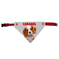 Collier bandana chien Cavalier king charles personnalisé avec le nom de votre animal