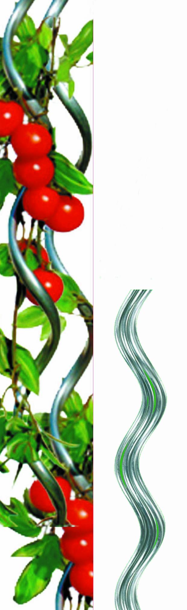 698-tuteurs-tomates-spirale-hauteur-180cm
