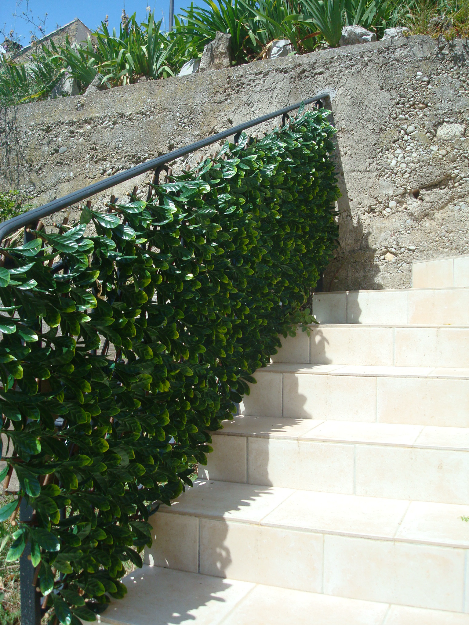 Treillis feuilles jasmin for Amenagement jardin guadeloupe