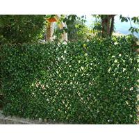 Treillis osier extensible - petites feuilles imitation Jasmin