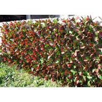 Treillis en osier extensible avec feuillage artificiel - Imitation laurier rouge