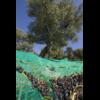62-filet-a-olives-63g-m2