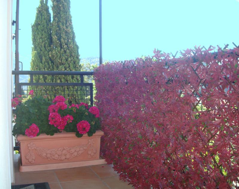 le terra de william le lyonnais (Pour Morelia Spilota Metcalfei 3 ans) 684-treillis-feuilles-vigne-vierge-rouge