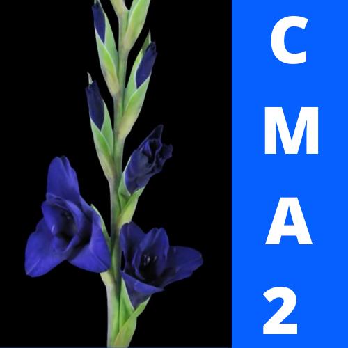 CMA2 - Manager en souplesse