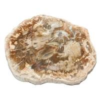 Tranche polie Bois fossile bloc entre 200 et 300 g
