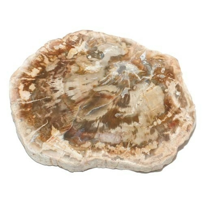 8133-tranche-polie-bois-fossile-bloc-entre-50-et-100-g
