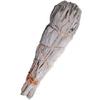 baton-sauge-amerindienne-sage-salvia