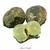 Préhnite-(phrénite)-brute-du-Mali-25-à-30-mm-1