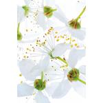 fleurs-image-sothys
