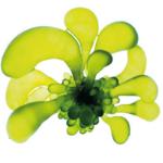 algue-spiruline-marin-masque-shot-booster-energie-thalgo
