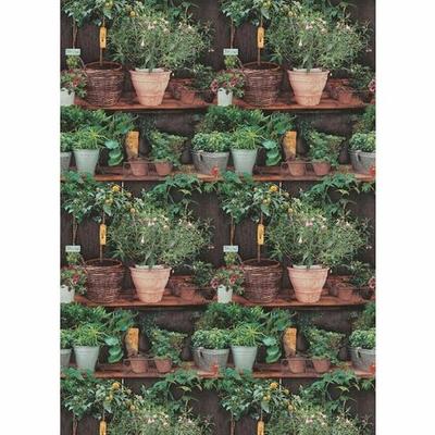 erismann-potted-plants-wallpaper-P-1504056-11275303_1