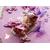 PP29B-Plaque de porte nuage bebe fille - au cœur des arts