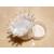 CD1-au-coeur-des-arts-couronne boîte à dragées bebe fimo