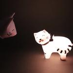 PV_chaton-rose-3