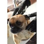 gant de pansage caoutchouc chien shampoing