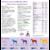 sabots-et-santé-complélment-alimentaire-cheval-hilton-herbs-enrichi-biotine3