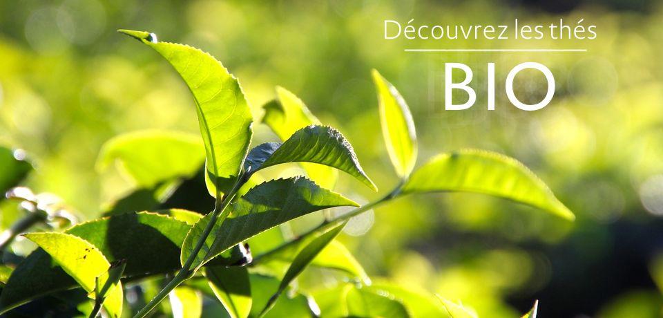 Sélection de thés Bio.