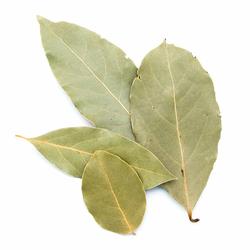 Laurier en feuilles