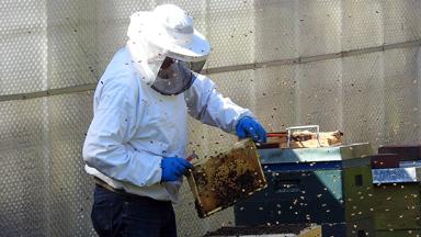 Devenir apiculteur: la formation pour tester le métier apiculteur.