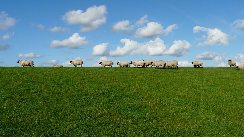 Berger / Eleveur de chèvres
