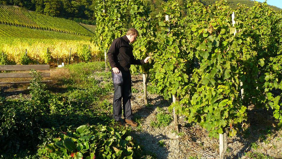 Devenir viticulteur / vigneron: la formation pour tester le métier viticulteur / vigneron.