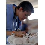 VETERINAIRE 2