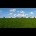 eleveur de moutons1