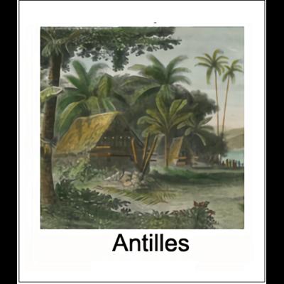 Gravure ANTILLES (choisir votre forme d'abat-jour et fond de couleur)