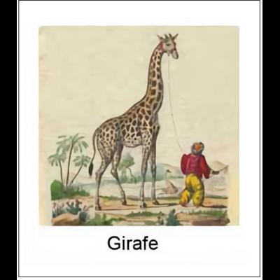 Gravure GIRAFE (choisir votre forme d'abat-jour et fond de couleur)