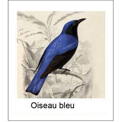 Gravure OISEAU BLEU (choisir votre forme d'abat-jour et fond de couleur)