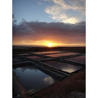 Bassins de récolte-Trace Minerals_web