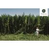 Plantation de BioBloom