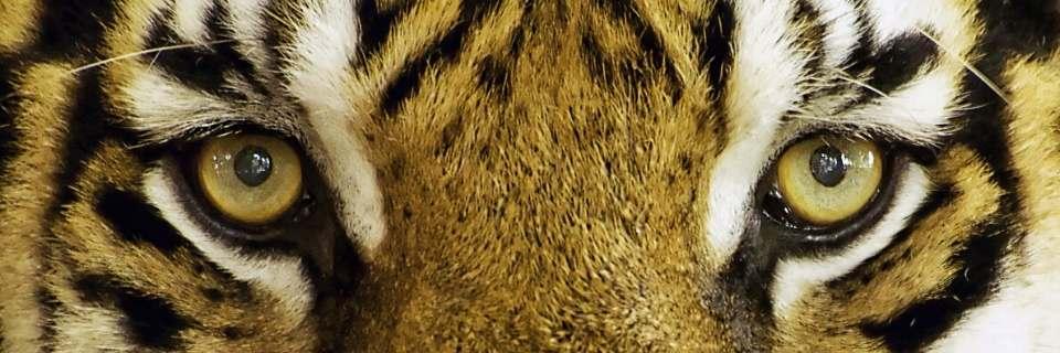 tiger Eye Perles Pierres de Tigre Bijoux